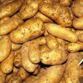 Kartoffelhof_007